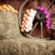 The interior of the building of the village. Wheel, hay, bucket, — Stock Photo