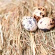 Quail eggs on the background of hay. — Stock Photo