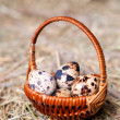 Quail eggs in a basket on the background of hay. — Stock Photo