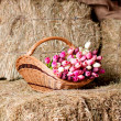 Stock Photo: Tulips in basket on background of hay.