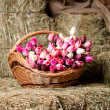 Tulips in the basket on the background of hay. — Stock Photo