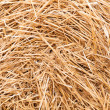 Background of straw on the field after harvest. — Stock Photo