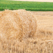 Bundles of straw on the field after harvest. — Stock Photo