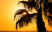Beautiful sunset sky at the sea, palm tree — Stok fotoğraf