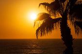 Evening sea, palm trees, sunset — Stock Photo