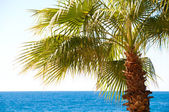 Beautiful palm tree against the sky and blue sea — Stock Photo
