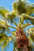 Palm tree view from bottom, sun's rays shine through branches — Stock Photo
