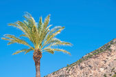 Lonely palm  tree on the mountain, against the sky — Stock Photo