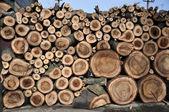 Walnut wood — Stock Photo