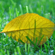 Yellow leaves on the grass — Stock Photo