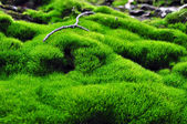 Green surface of moss — Stock Photo