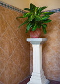 Flower pot on column — Foto de Stock