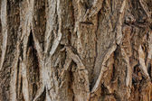 Bark wood texture — Stock Photo