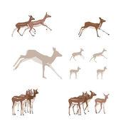 Antelope illustration set — Stock Vector