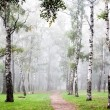 Morning birch grove in deep autumn fog — Foto Stock