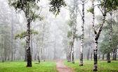 Morning birch grove in deep autumn fog — Stock Photo