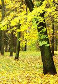 Folhagens coloridas no outono chuvoso parque — Foto Stock