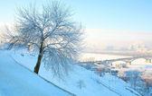 Krásné zimní strom v silné mrazy a růžová modrá obloha — Stock fotografie