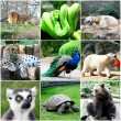 Beautiful animals collage with nine photos - Stock Photo