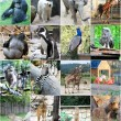 Collage of different animals — Stock Photo #18181615