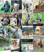 Collage of different animals — Stock Photo
