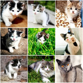 Collection of funny kitten — Stock Photo