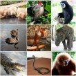 Animals collage with nine photos Thailand — Stock Photo