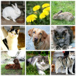 collage des animaux - chat, chien, lapin — Photo