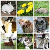 Collage of animals - cat, dog, rabbit — Stock Photo