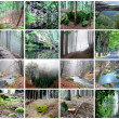 Collage of Beautiful Forest - Stock Photo