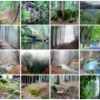 Collage of Beautiful Forest — Stockfoto