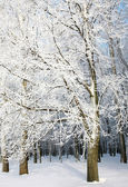 Trees with snowy branches — Stock Photo