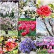 Spring flowers collage — Stock Photo #23136972