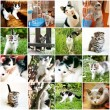 Stock Photo: Collection of different funny kitten