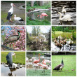 Collage of different birds — Stock Photo #23800567