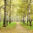 Stock Photo: Autumn pathway in october morning mist birch grove