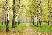 Autumn pathway in october morning mist birch grove — Stock Photo
