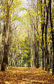 Sunny autumn october forest on blue sky — Stock Photo