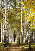 Golden mixed autumn forest in sunny weather — Stock Photo