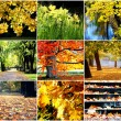 Golden autumn — Stock Photo #38302121