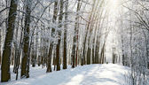 Path in sunny winter forest — Photo