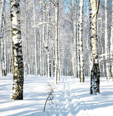 Ski run in winter forest — Stock Photo