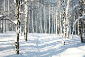 Footpath in sunny winter forest — Stock Photo