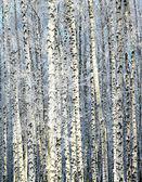 冬晴れバーチ グローブ — ストック写真