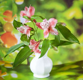 Beautiful alstroemeria lily flowers in white vase — Stock Photo