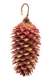 Decor fir cone — Photo