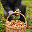 Basket full of mushrooms in forest. — Stock Photo #18936733