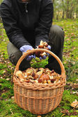 Basket full of mushrooms in forest. — Stock Photo