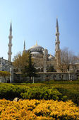 Blue Mosque (Sultanahmet Camii). — Stockfoto