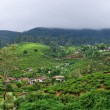 Tea plantations in Sri Lanka. Nuwara Eliya. - Stock Photo